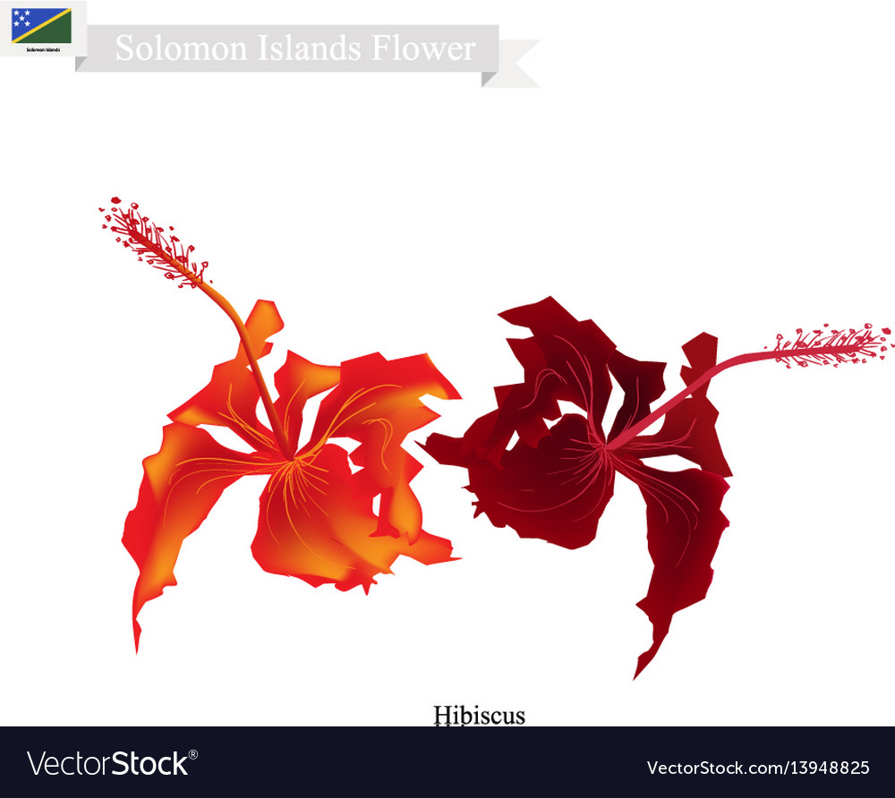 National flower of solomon the hibiscus flowers vector image izmirmasajfo