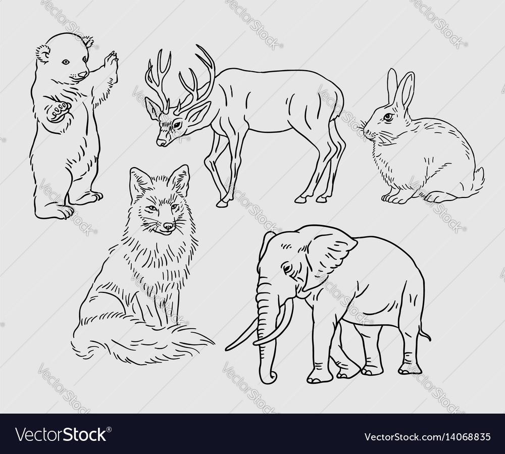 Wild animal sketches