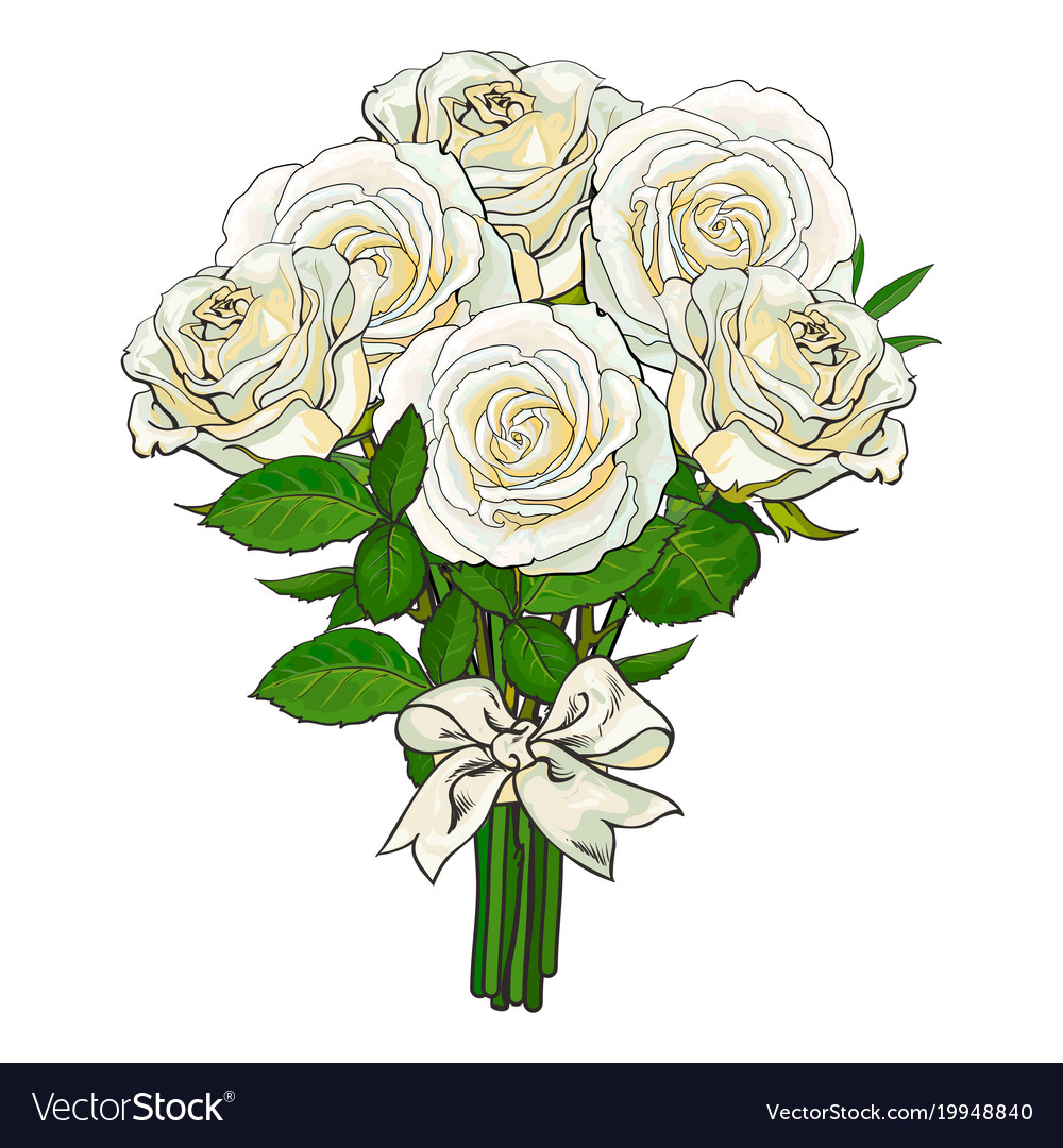 Bouquet bunch of white roses tied with ribbon vector image izmirmasajfo