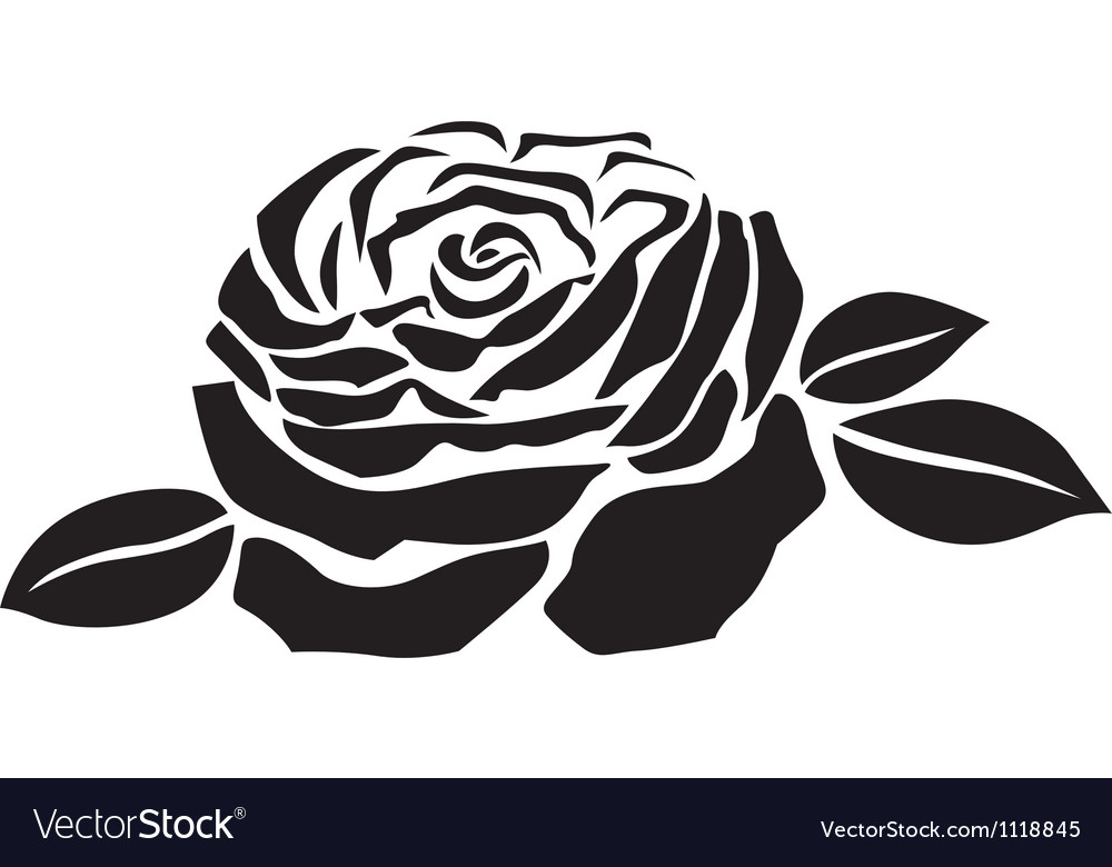 Rose Flower Royalty Free Vector Image Vectorstock
