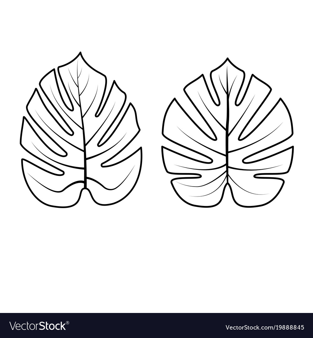 Tropical Leaves Collection Royalty Free Vector Image You can edit any of drawings via our online image editor before downloading. vectorstock
