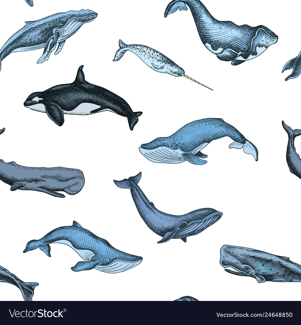 Pattern with whale hand drawn