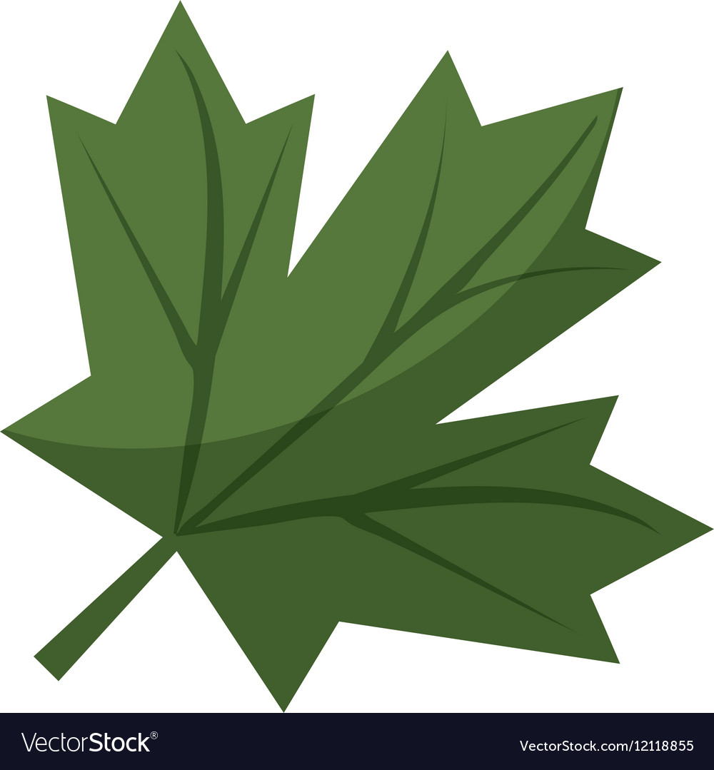 canadian maple leaf images - HD1000×1079