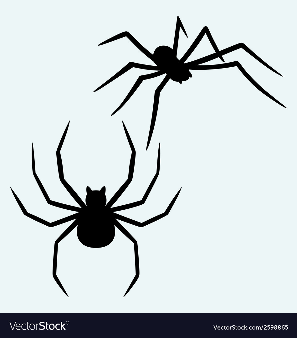 black spider royalty free vector image vectorstock rh vectorstock com spyder victor 2 spyder victor review