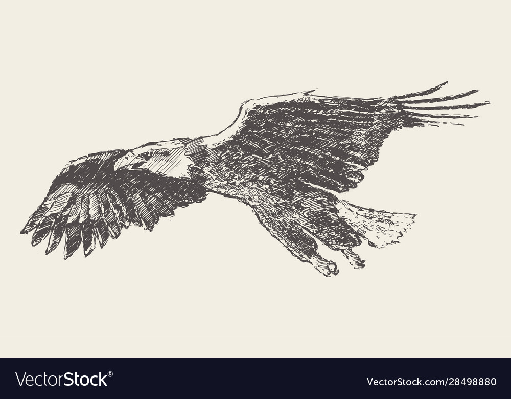 Flying eagle hand drawn sketch