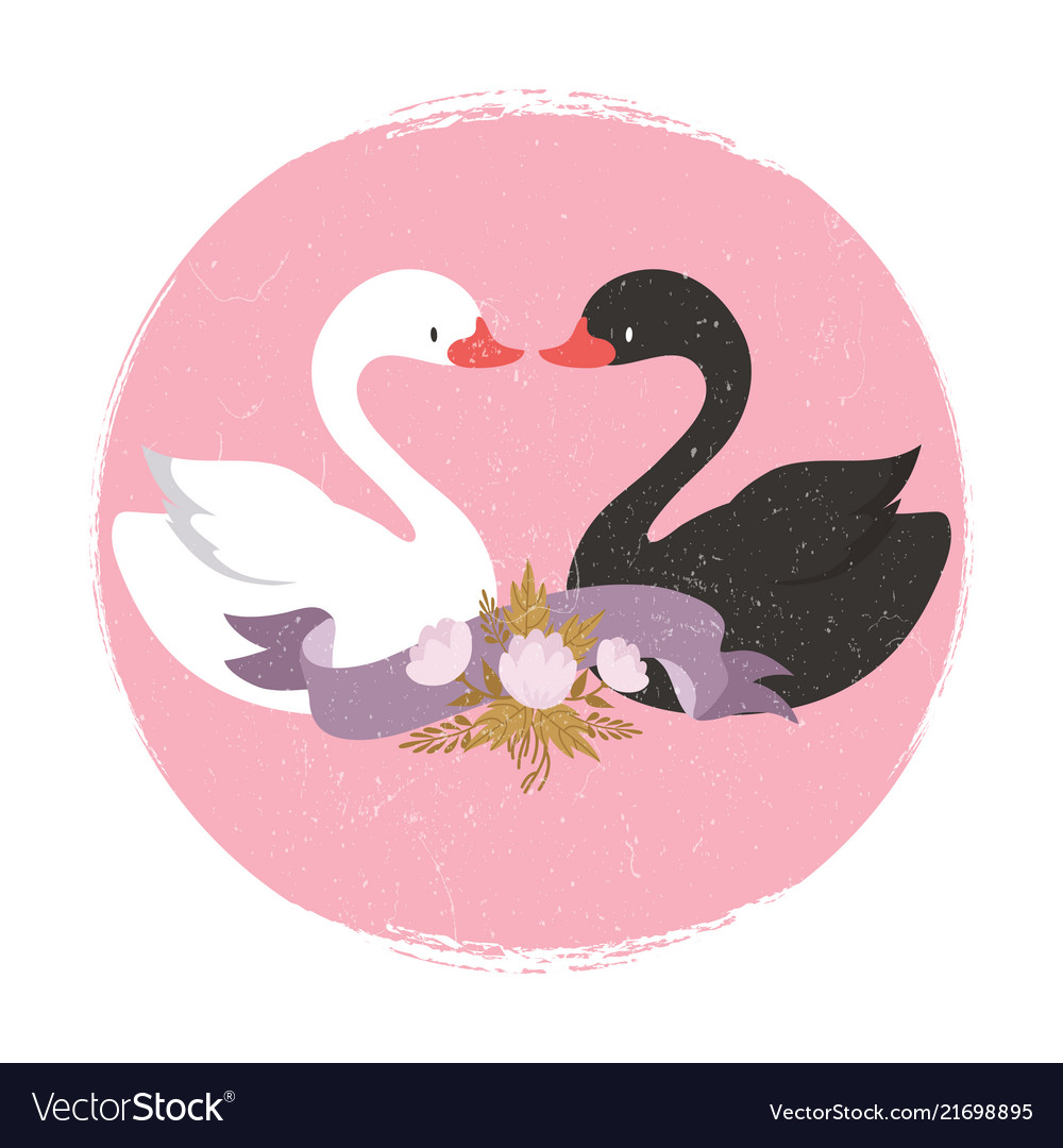 White and black swans character swans in love