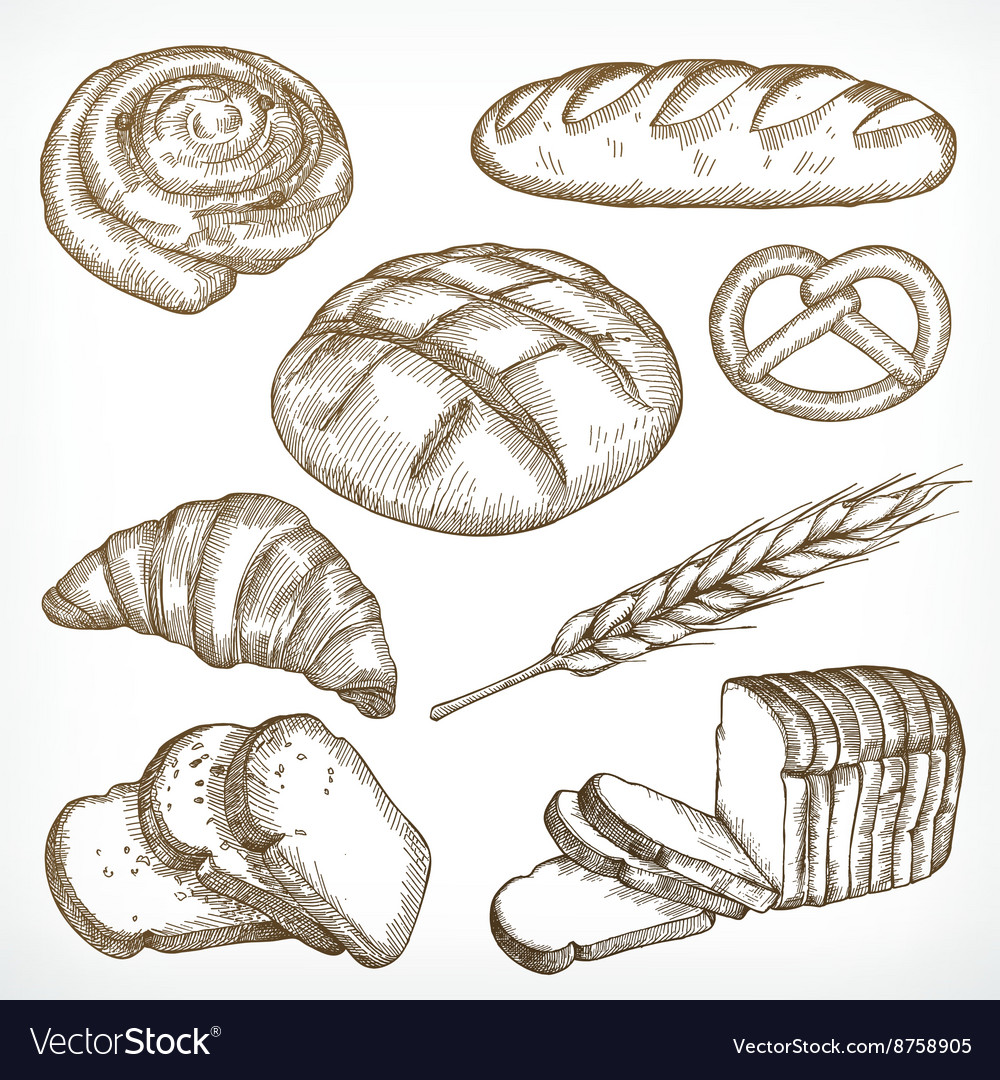 Bread sketches hand drawing