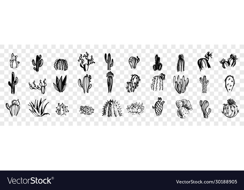 Doodle sketch hand drawn cactuses set collection