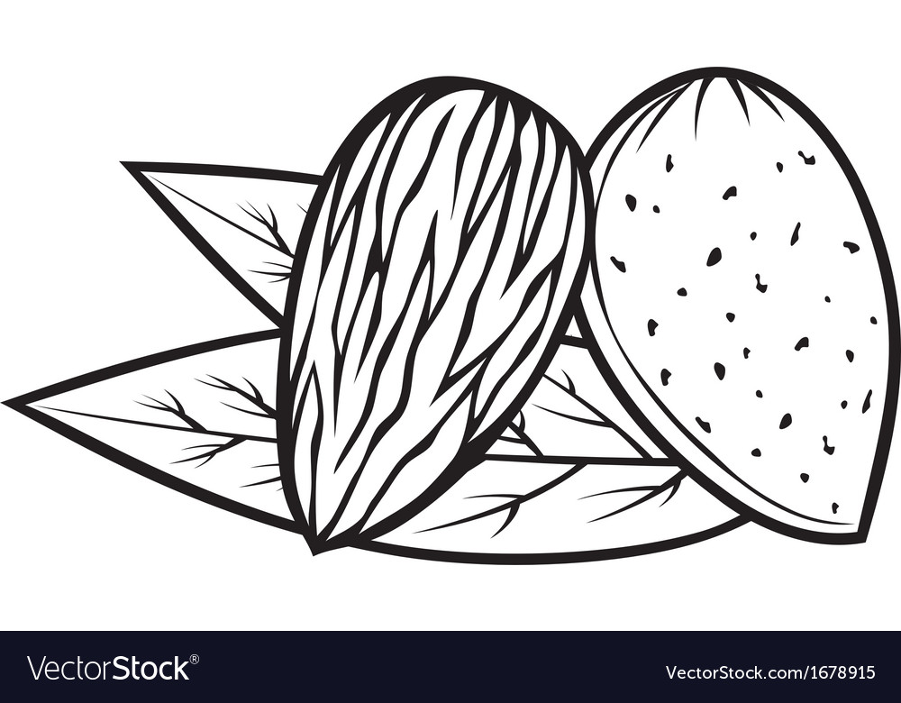 Almond with leaves - almond nut vector image