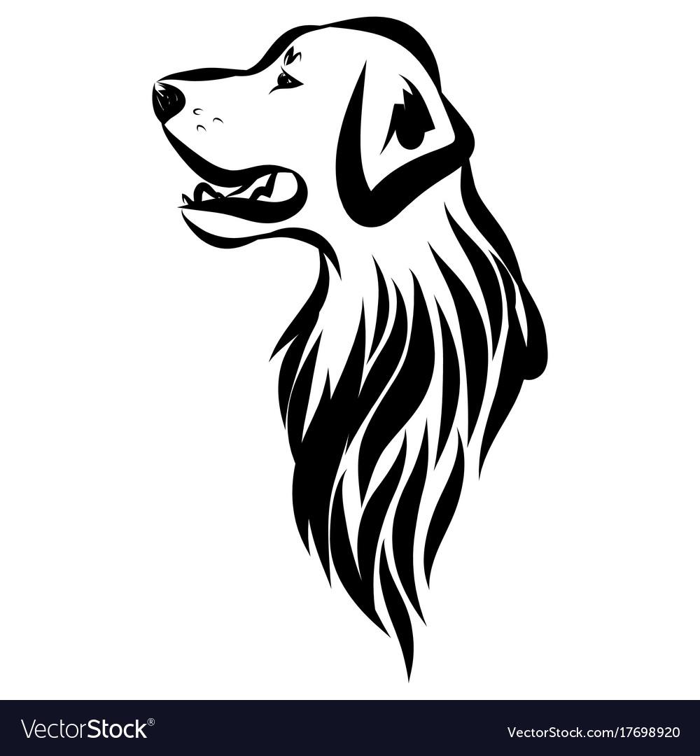 Image of an dog labrador