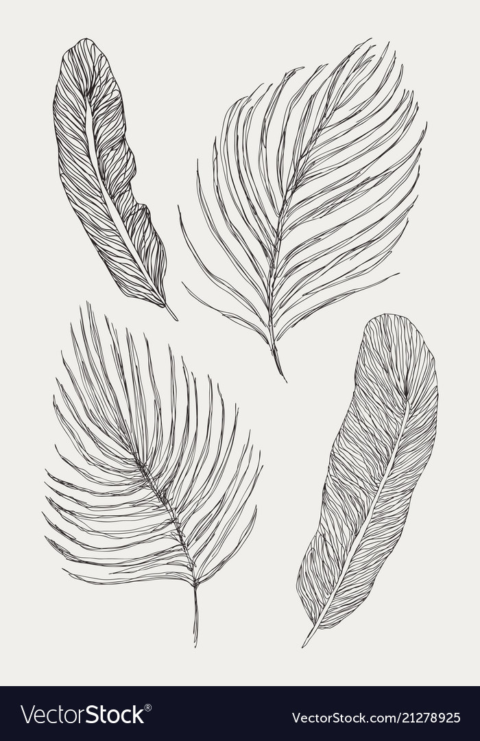 Tropical exotic leaves set isolated on