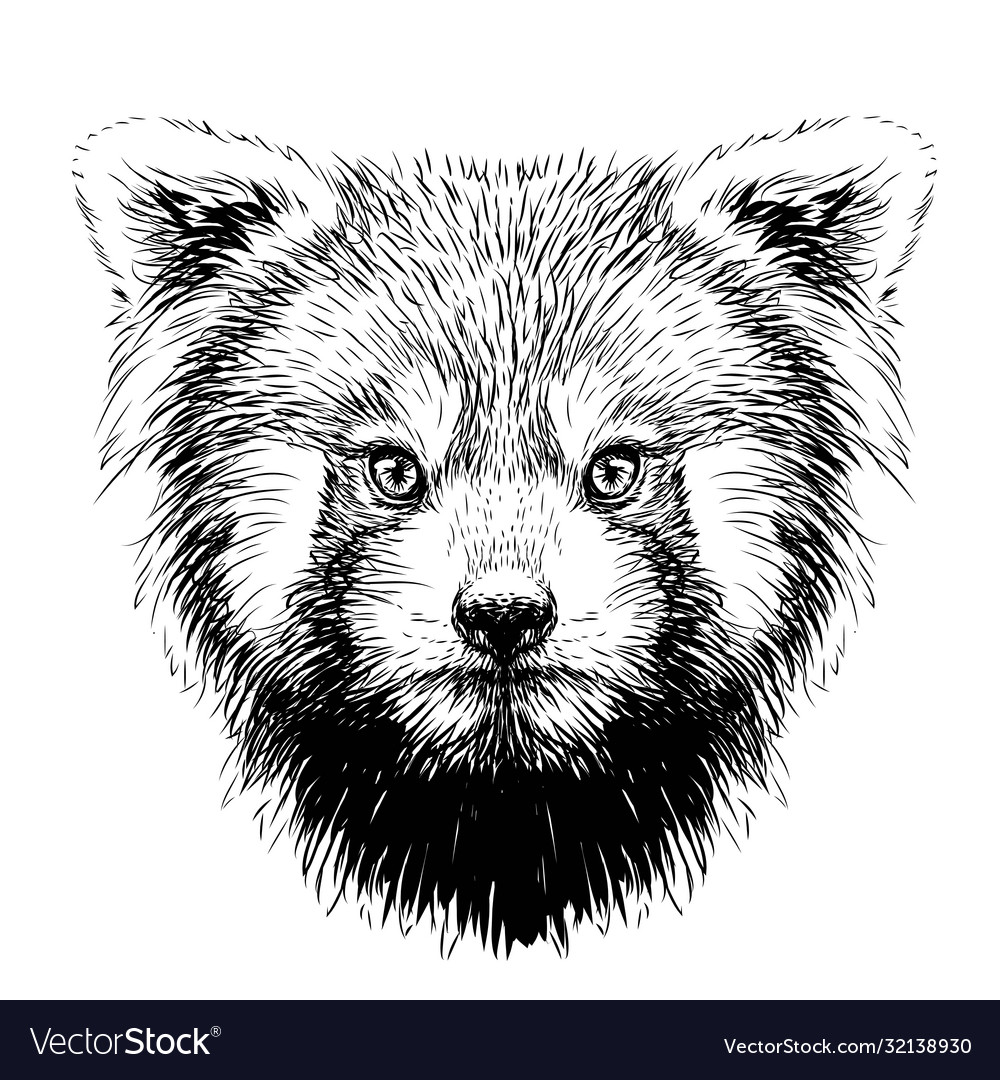 Red panda graphic sketch hand-drawn portrait