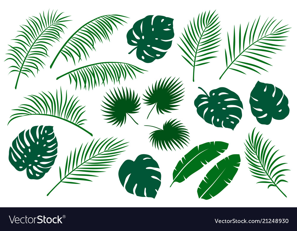 Set of green palm leaves vector image