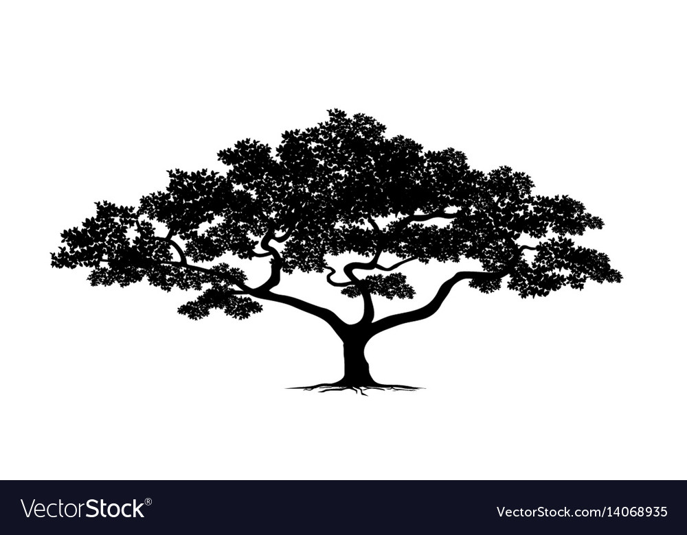 Silhouette tree set vector image