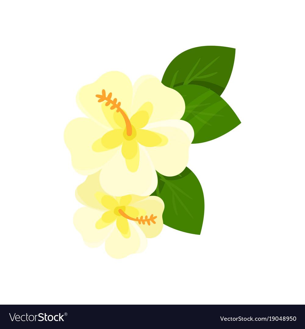 Frangipani Tropical Flower Cartoon Royalty Free Vector Image