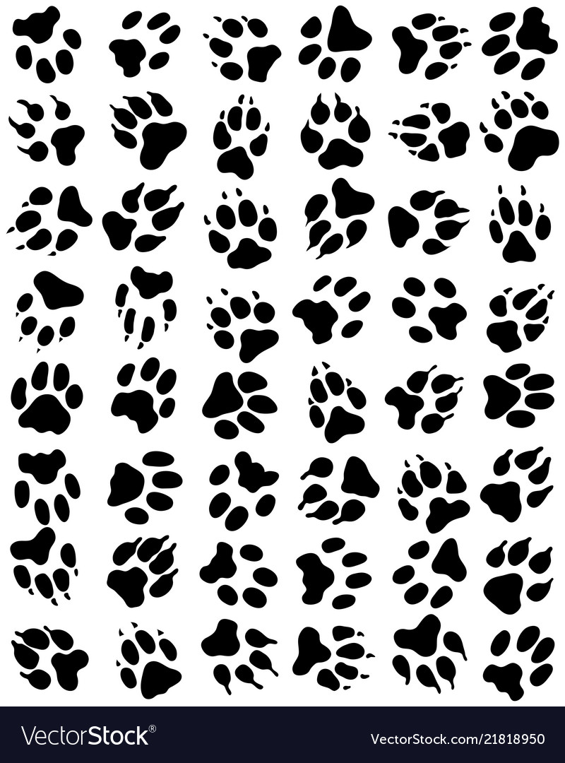 Print dogs paws