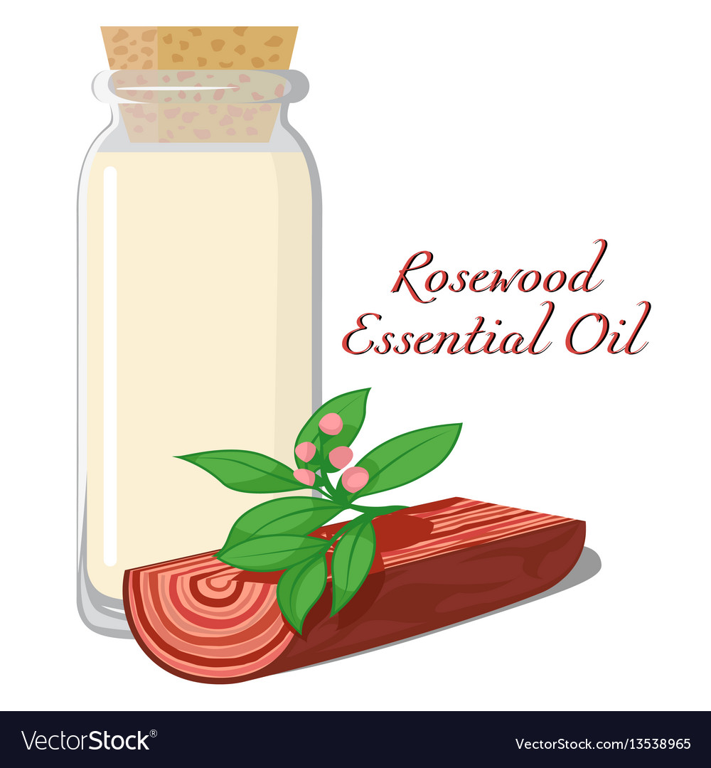 Rosewood essential oil vector image