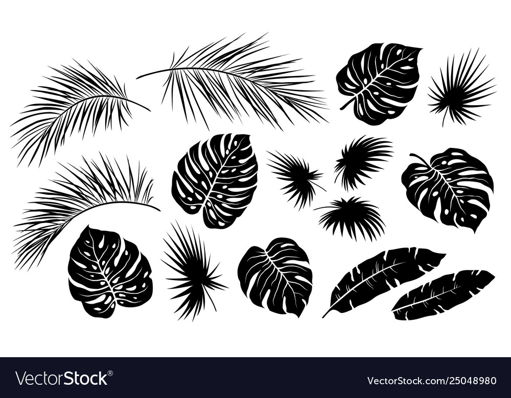 Black tropical jungle isolated palm leaves set