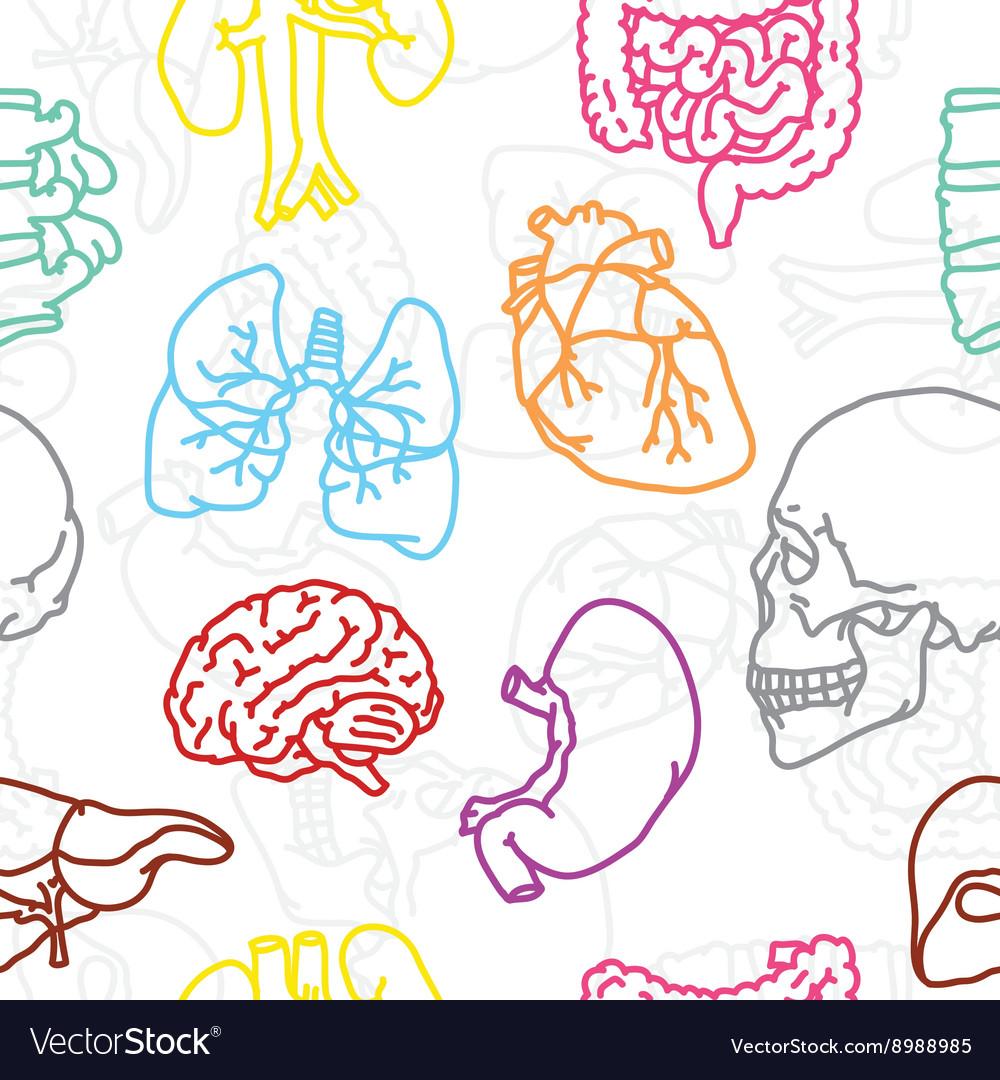 Human organs seamless pattern vector image