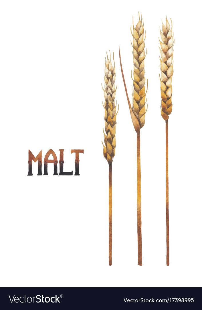 Watercolor malt set vector image