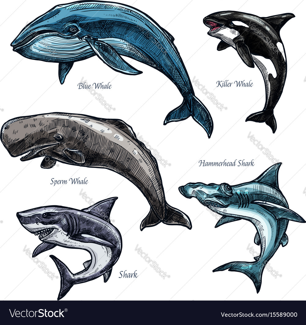 Giant sea animals whale and shark icons set vector image
