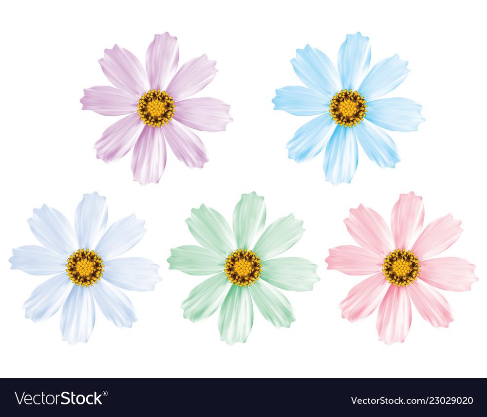 Daisy flowers set isolated 3d