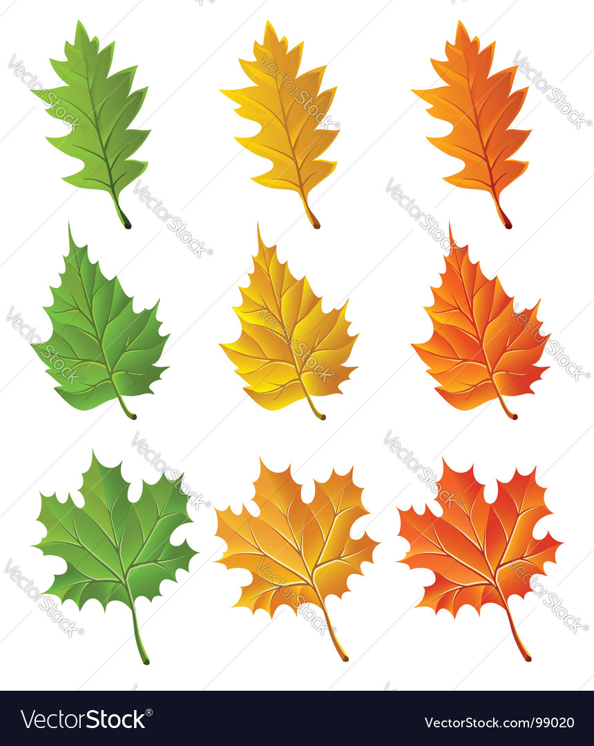 Set of autumn season leaves vector