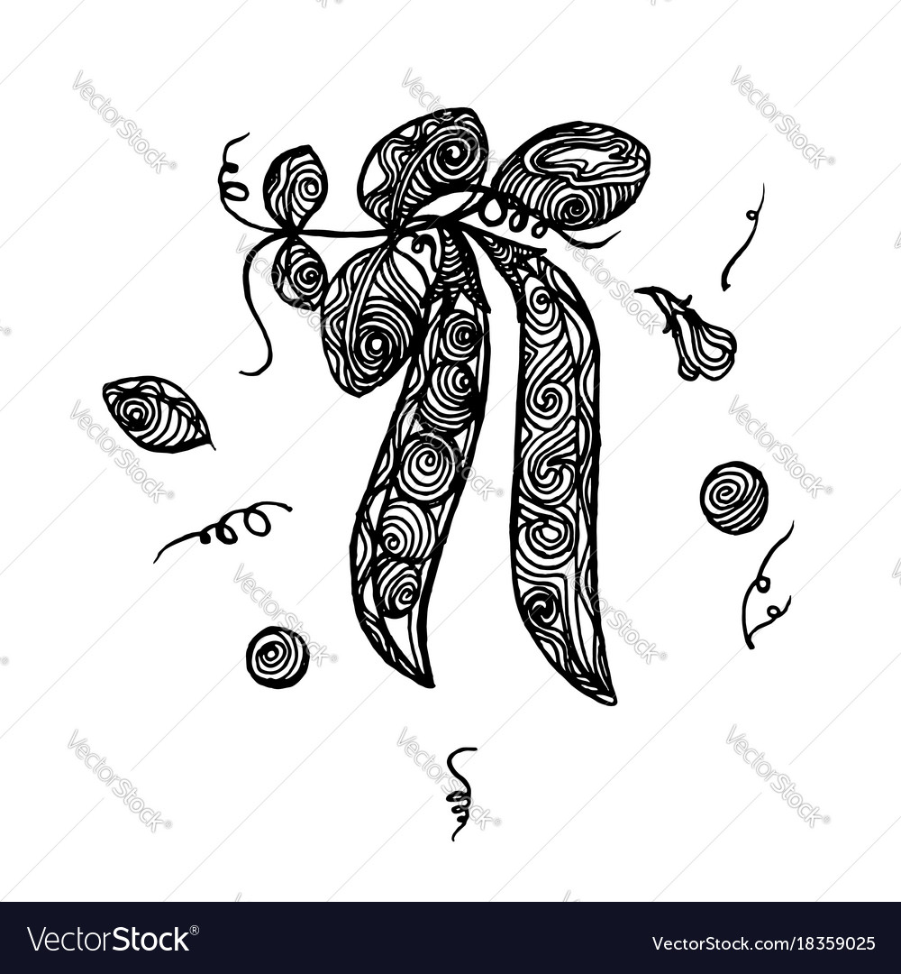 Peas sketch vector image