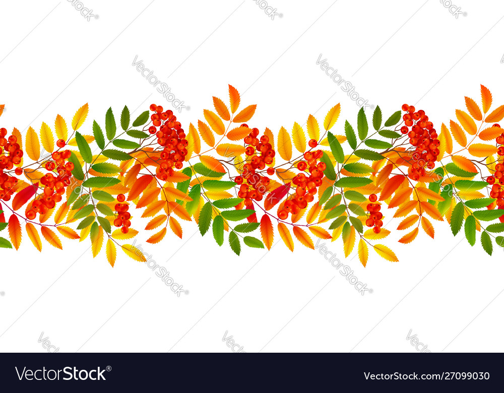 Bright colourful rowan berries and leaves autumn