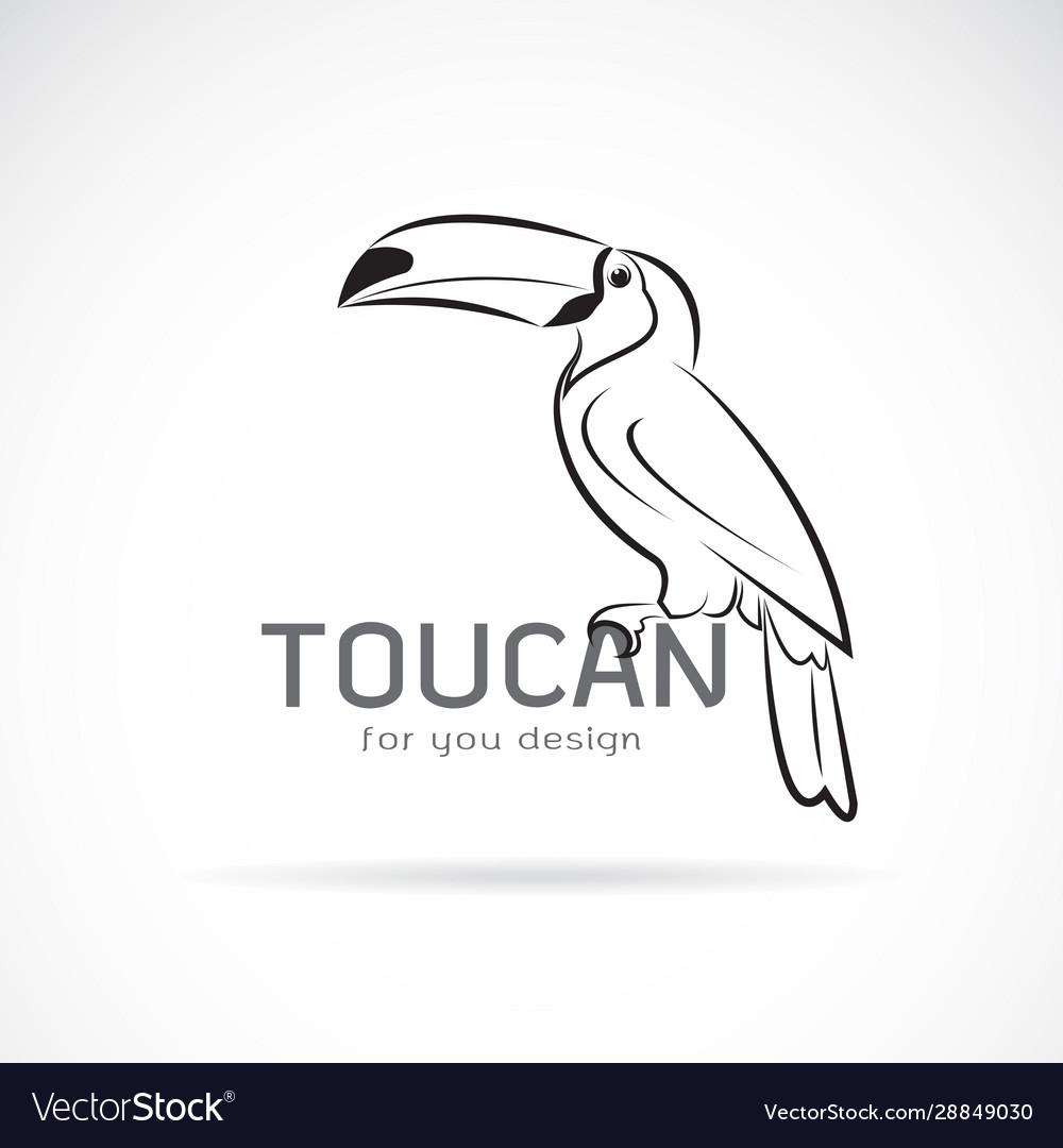 Toucan birb design on white background wild