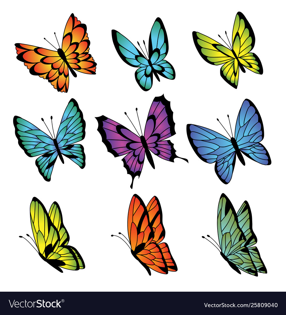 Collection colorful butterflies