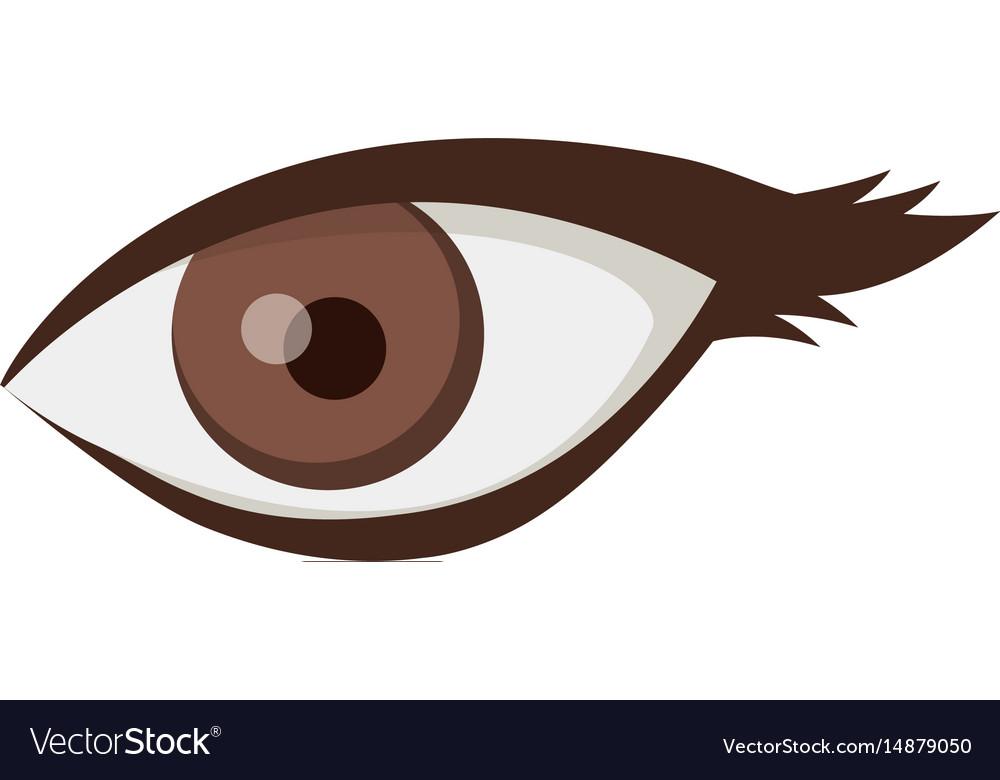 White background with female eye vector image