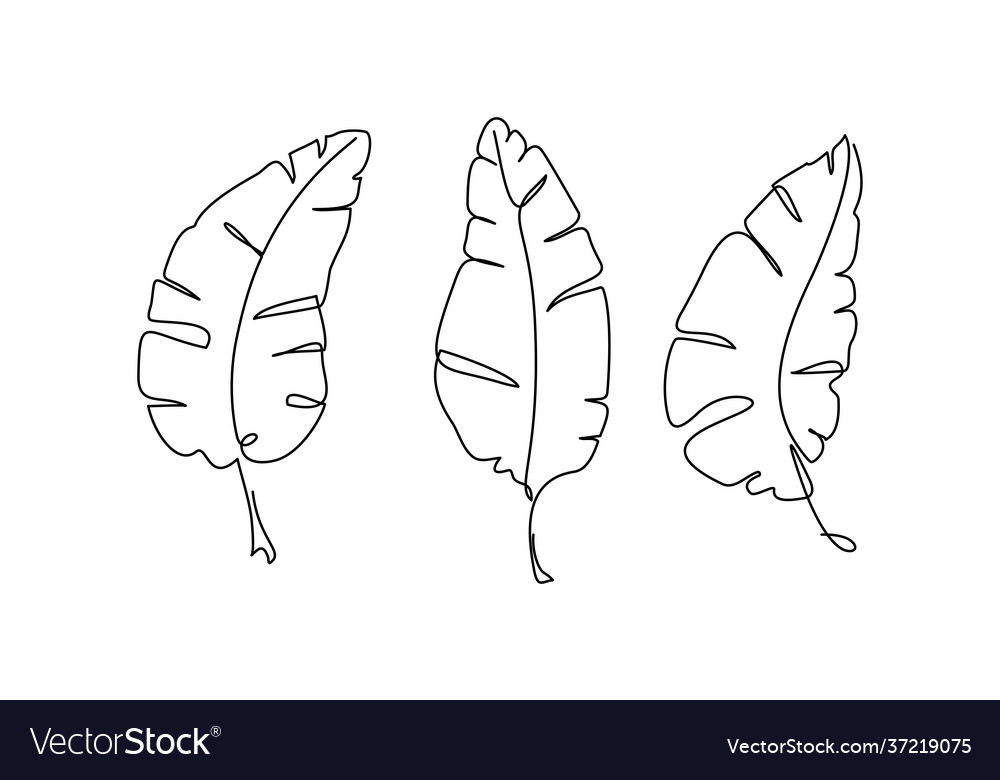 Banana leaf continuous one line drawing line art