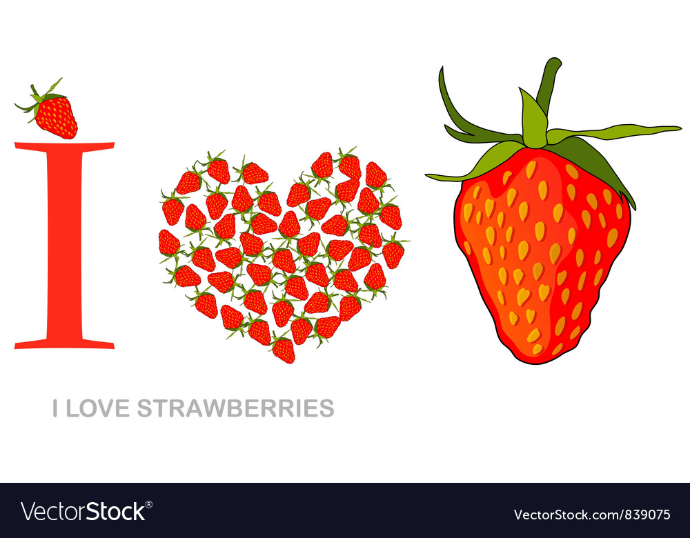 I love strawberries vector image