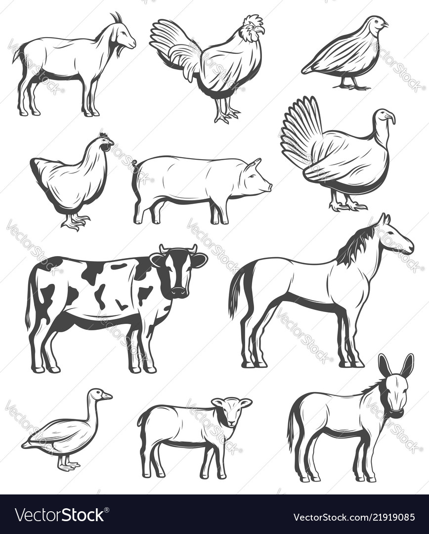 Cattle farm animals and birds