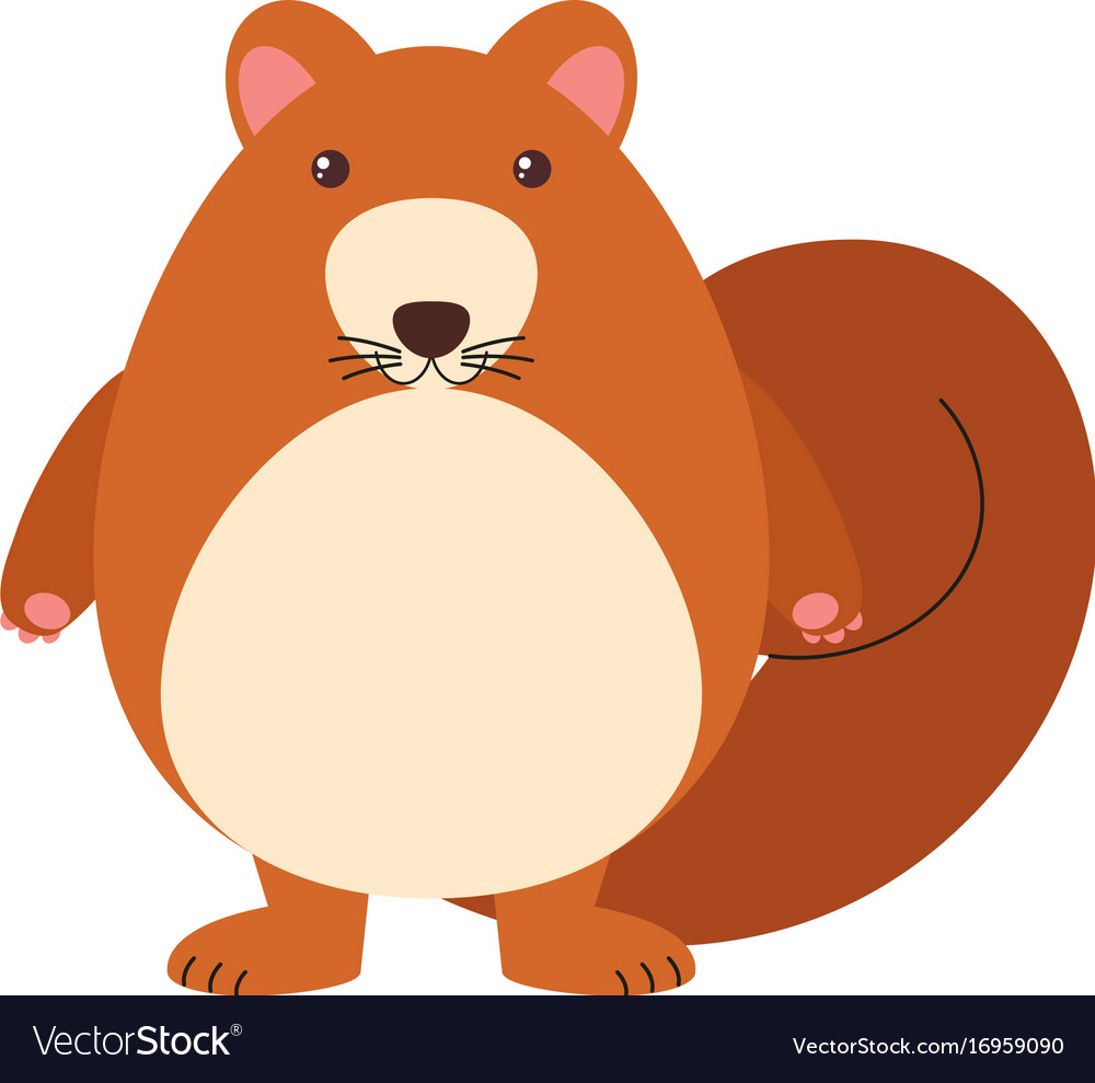 Brown squirrel on white background vector image