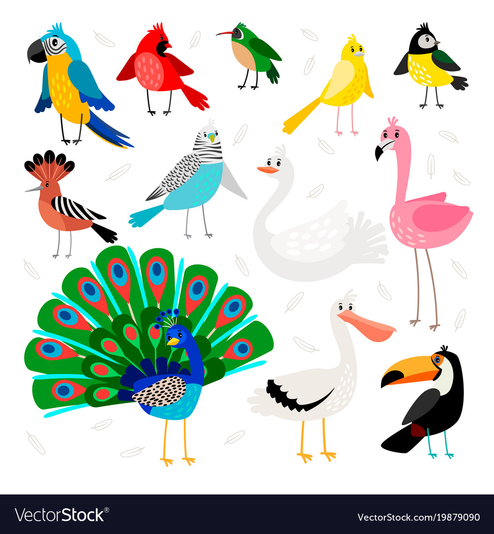 Tropical and exotic birds set vector image