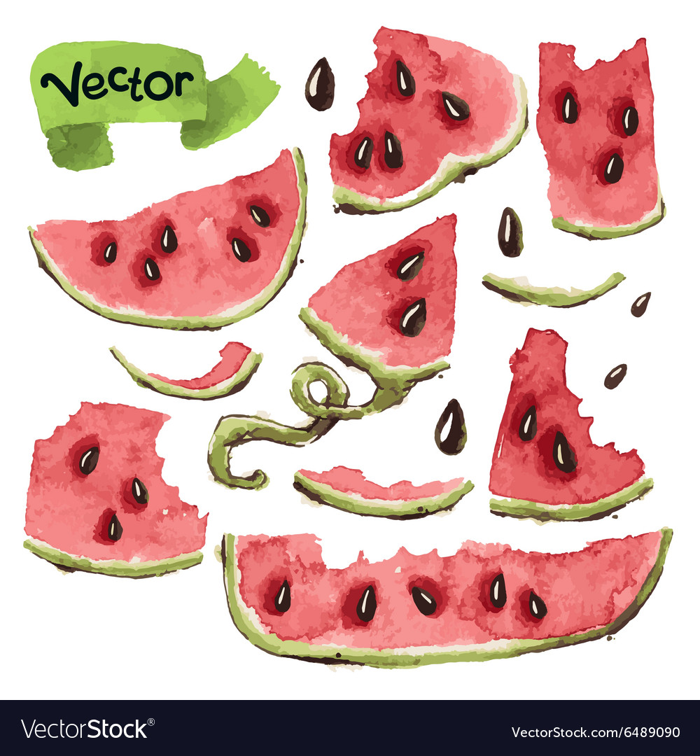 Watermelon Slices Set vector image