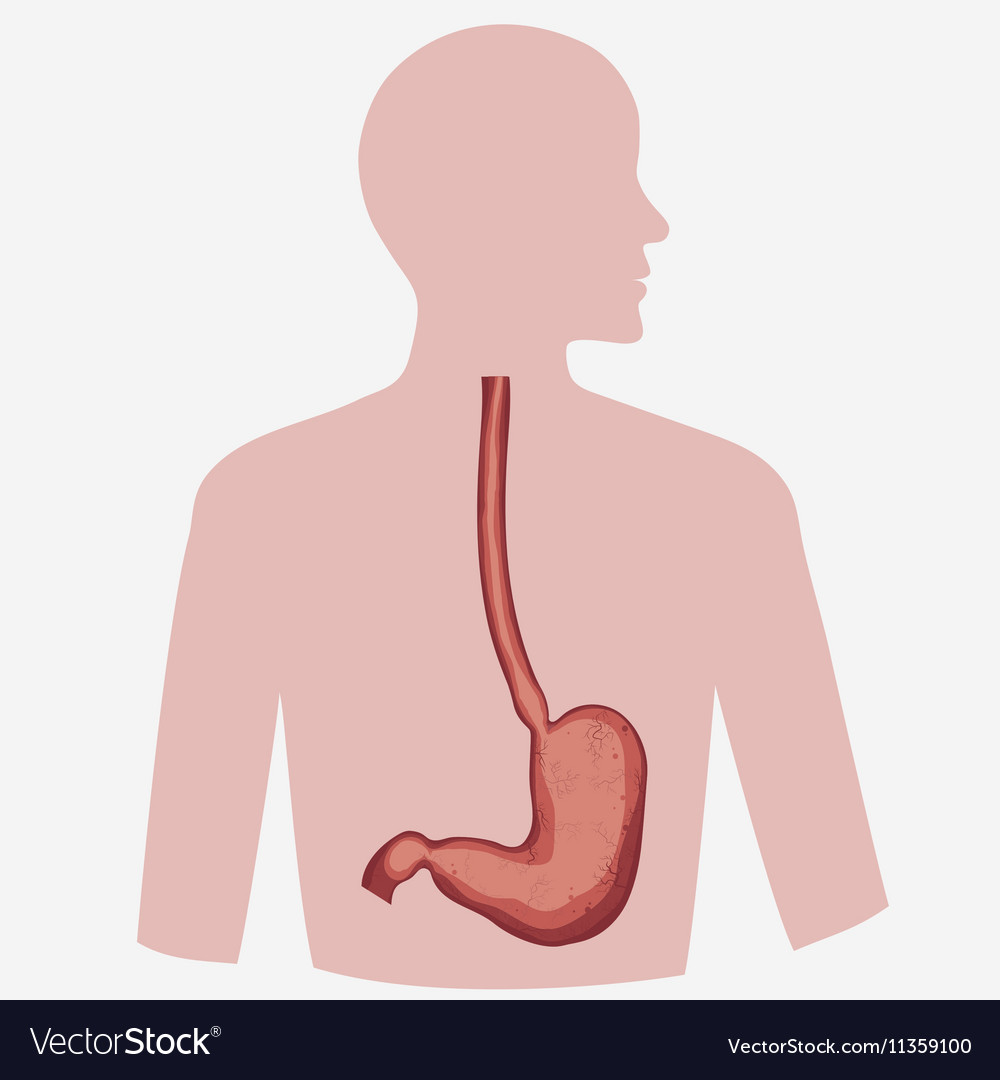 Stomach Image
