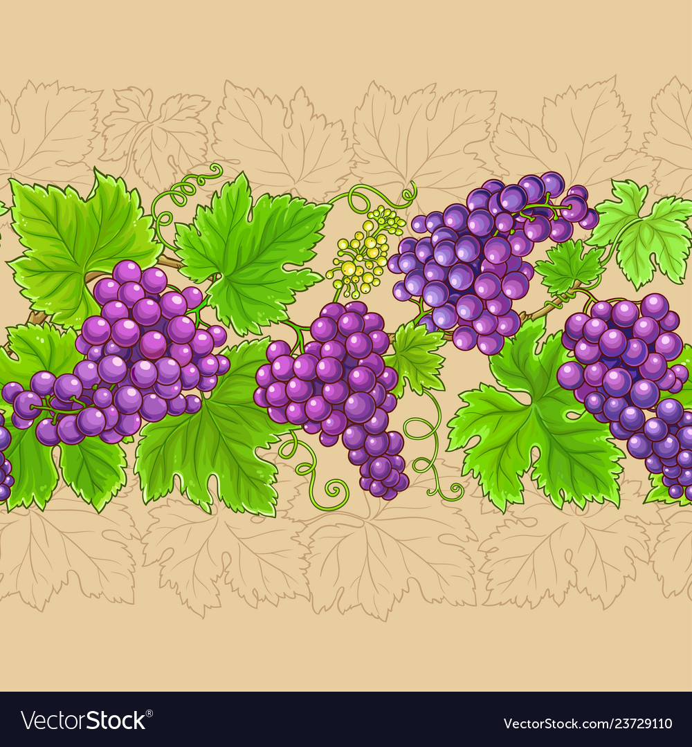 Grapes horizontal pattern on color background
