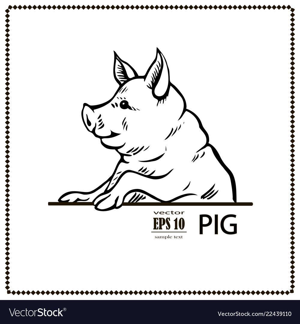 Pig black and white