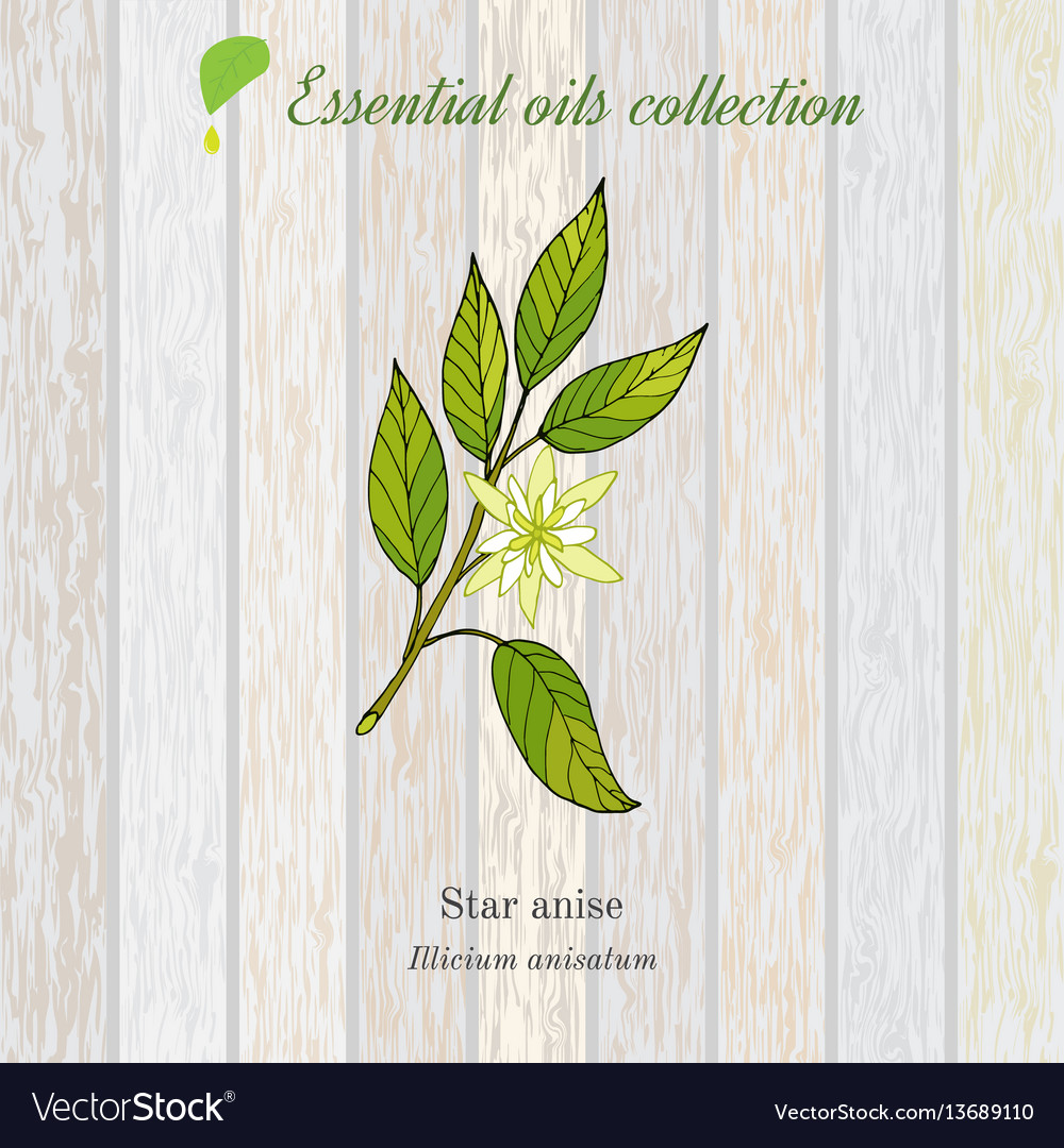 Star anise essential oil label aromatic plant