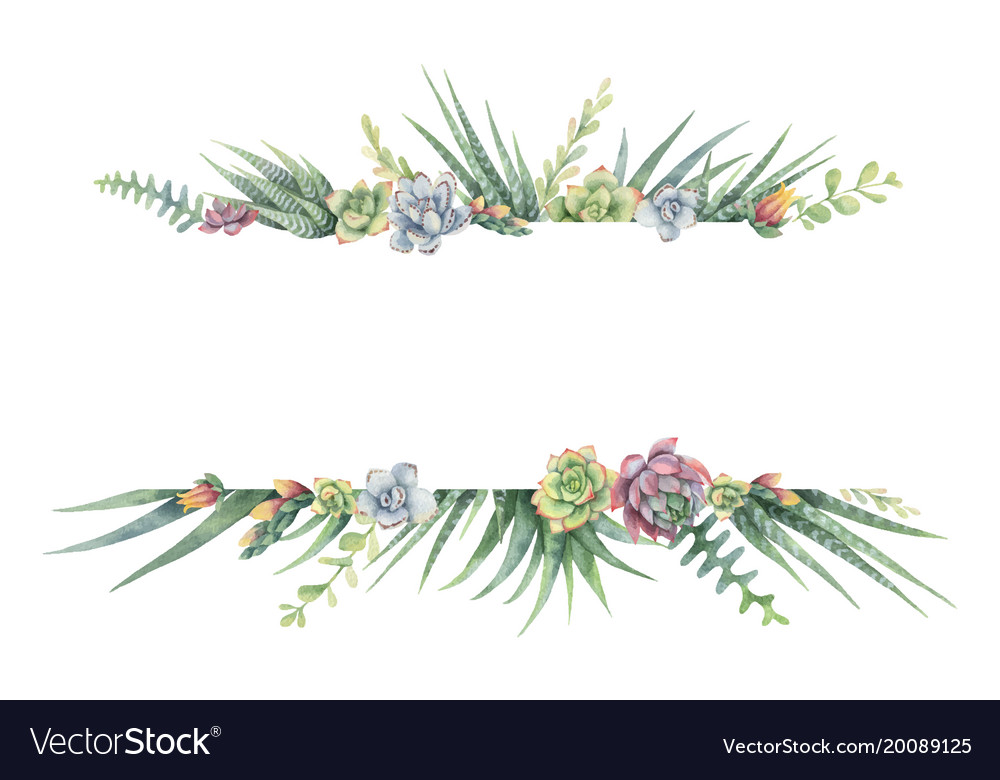 Watercolor banner of cacti and succulent vector image