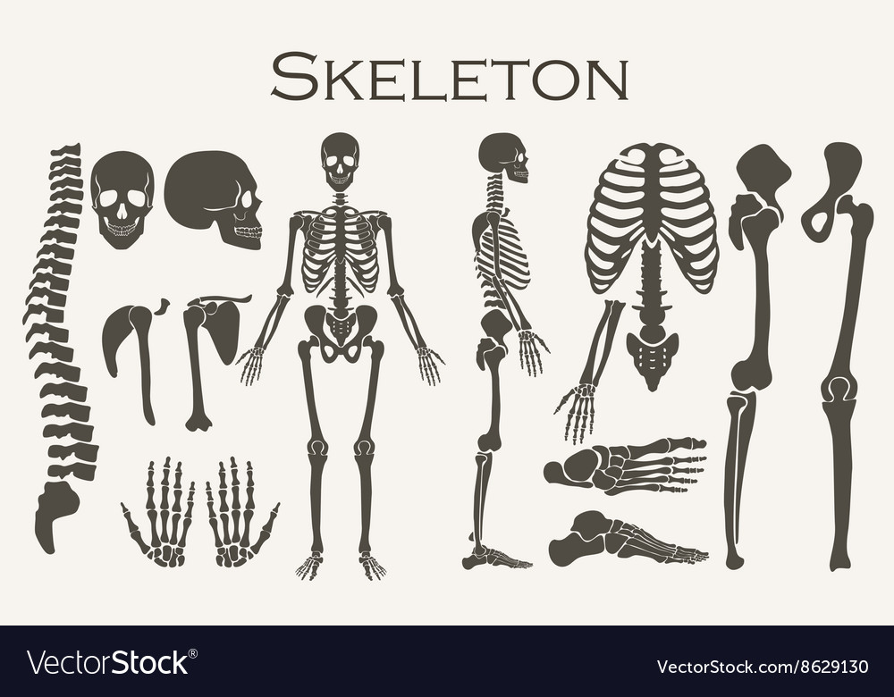 Human bones skeleton silhouette collection set