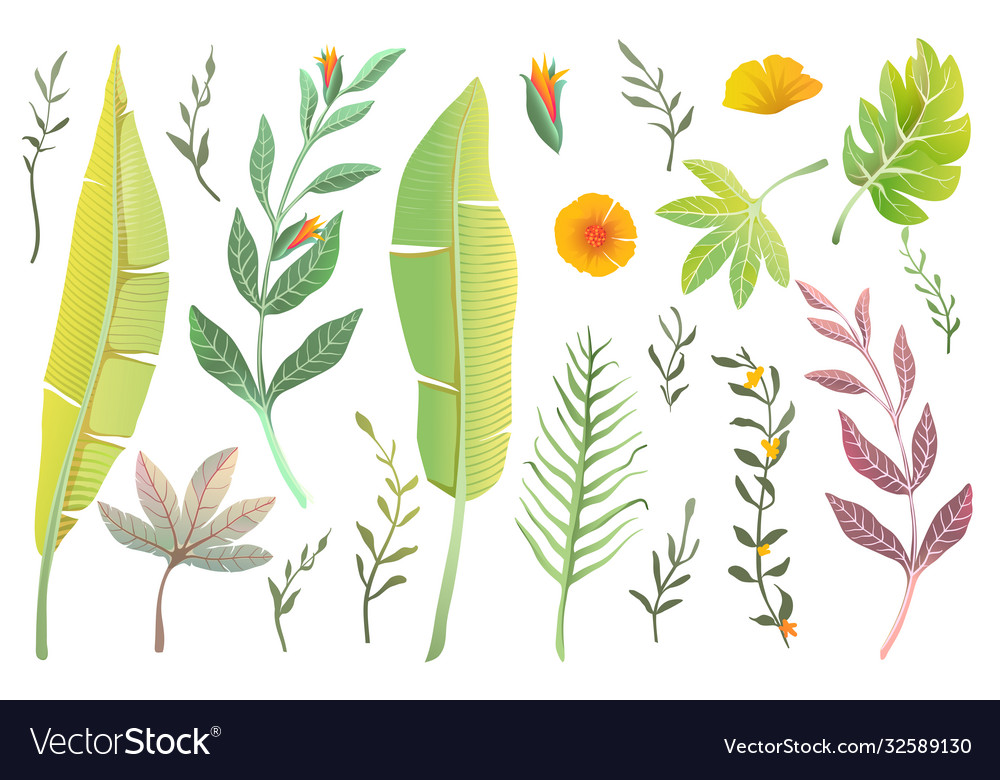 Jungle leaves and flower exotic clipart nature set
