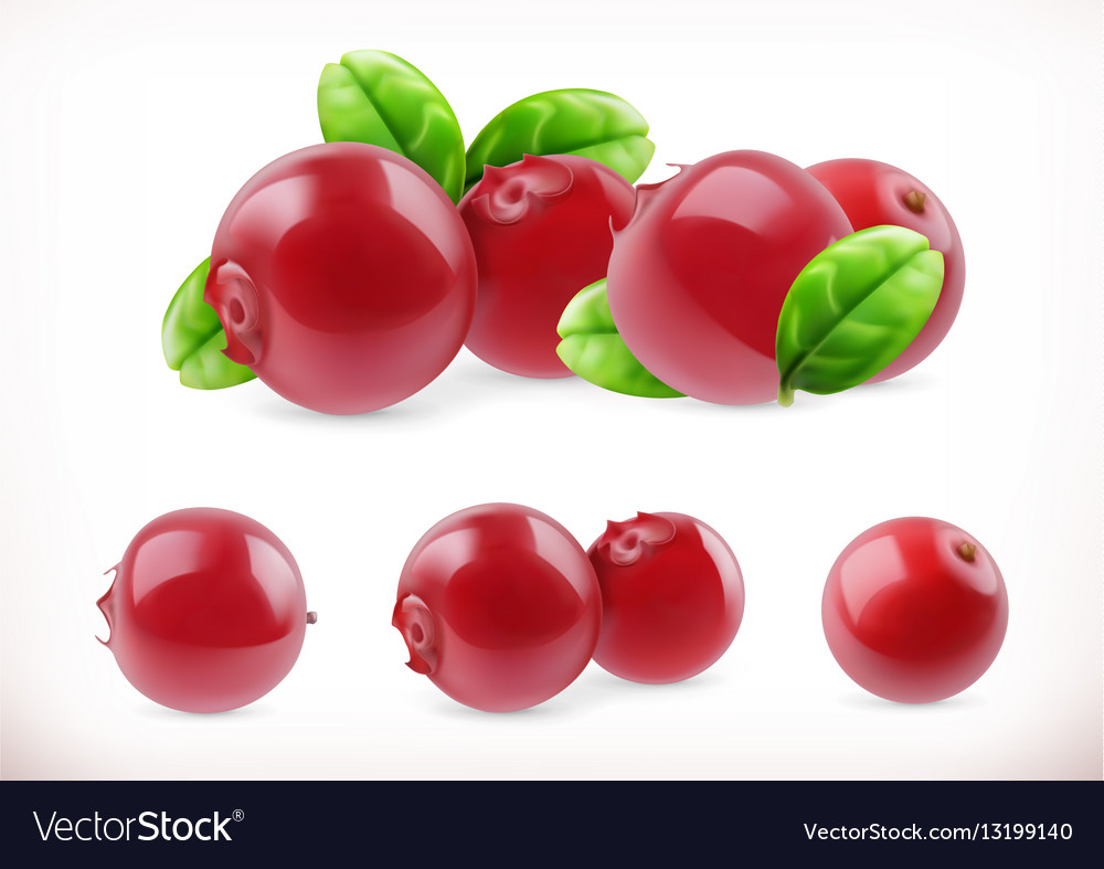 Lingonberry cowberry sweet fruit forest berry 32d Vector Image