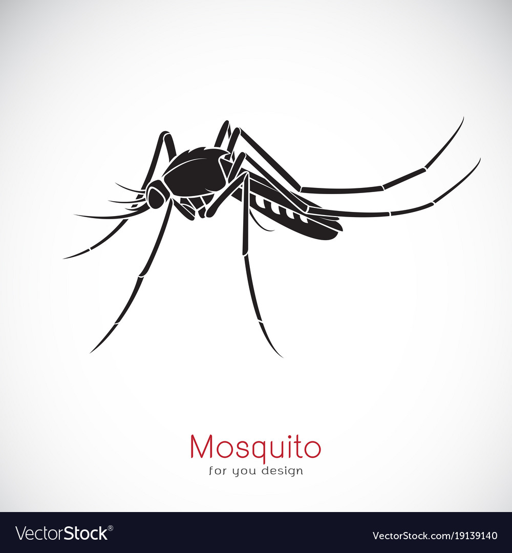 Mosquito design on white background insect