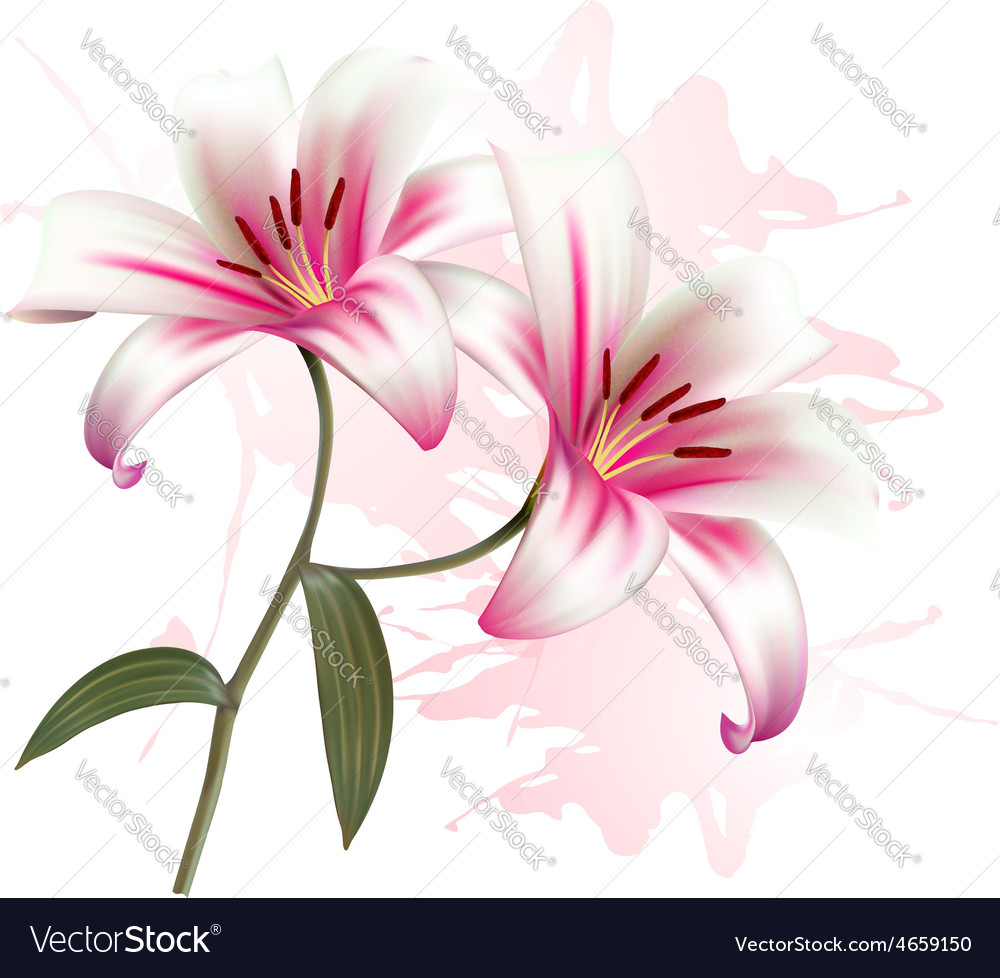 Flower background with two beautiful lilies vector image izmirmasajfo