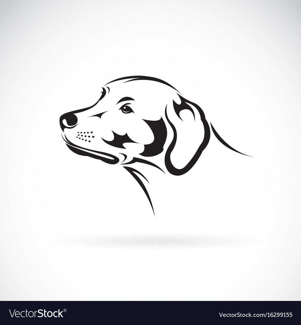 Dog head labrador retriever on white background