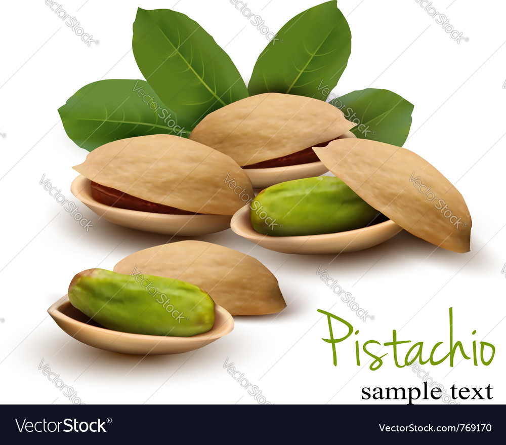 Pistachio with leaves vector image